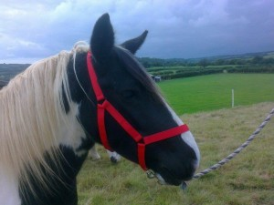 Westernway Horse Head Safety Collar